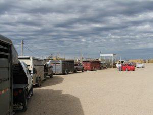 Mercato del bestiame trailers