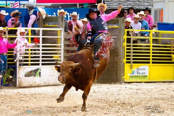 western heritage davide carucci rodeo
